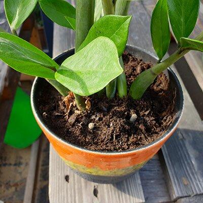 Langzeitdünger für Topf- und Zimmerpflanzen